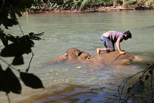 Elephant Trekking in Mondulkiri - Elephant Washing